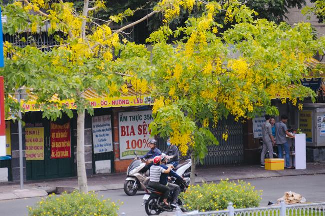 """""""Thành phố những ngày này đẹp quá. Sắc vàng của hoa khiến tôi cứ nao nao, cảm thấy nhịp sống Sài Gòn như chậm lại, thư thả không vướng lo toan"""", anh Trần Đúng (quận 3) nói."""