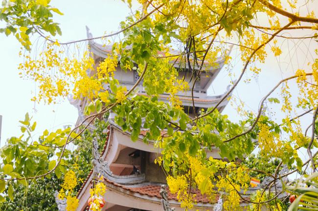 Hoa khoe sắc vàng trên nhiều tuyến đường ở TP.HCM.