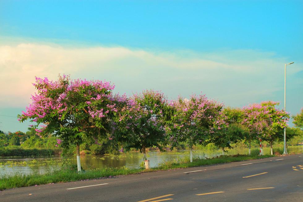 Theo các hộ dân sống ở khu vực này, các bạn trẻ tới đây thường chọn chụp với những cây bằng lăng thấp, có hoa gần với tầm người đứng và tán cây không quá to để thấy được dòng sông phía sau (như ảnh) - Ảnh: HOÀNG PHÁT