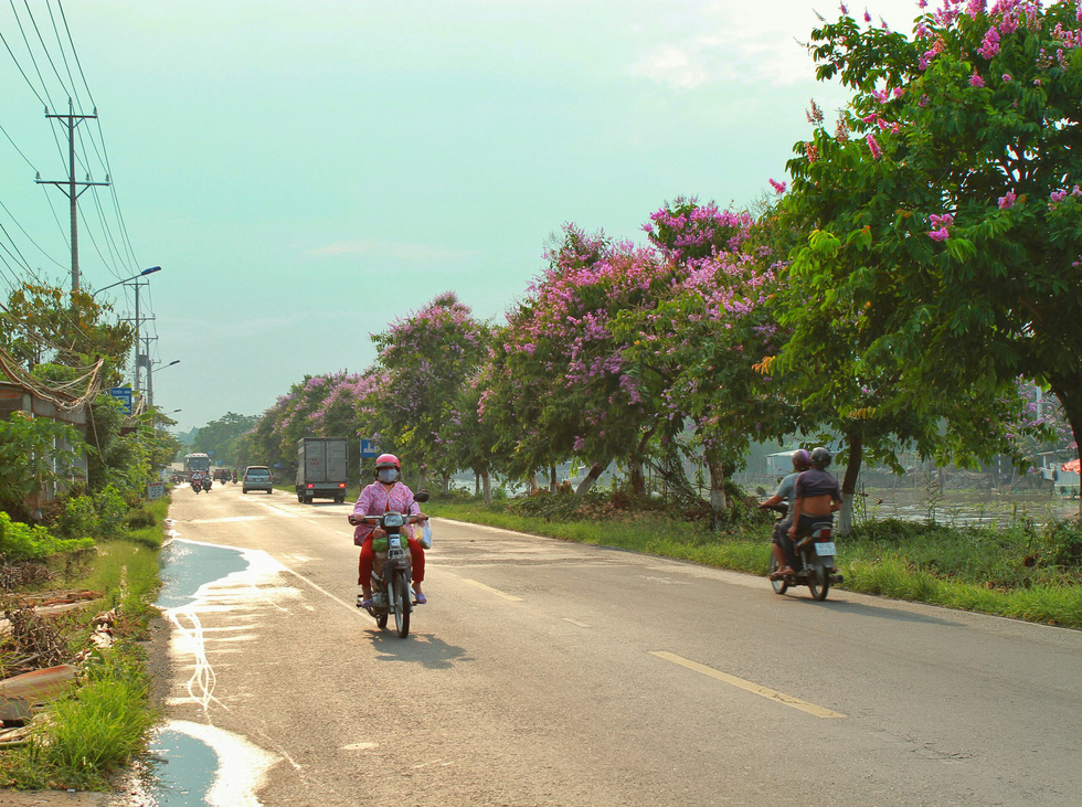 """Chị Ngọc Diễm (người dân ở khu vực này) cho biết: """"Con đường thường ngày chỉ toàn xe cộ, nắng như thiêu đốt mà nay có màu hoa bằng lăng tím nhẹ nhìn mát mắt và sáng sủa hơn"""" - Ảnh: HOÀNG PHÁT"""