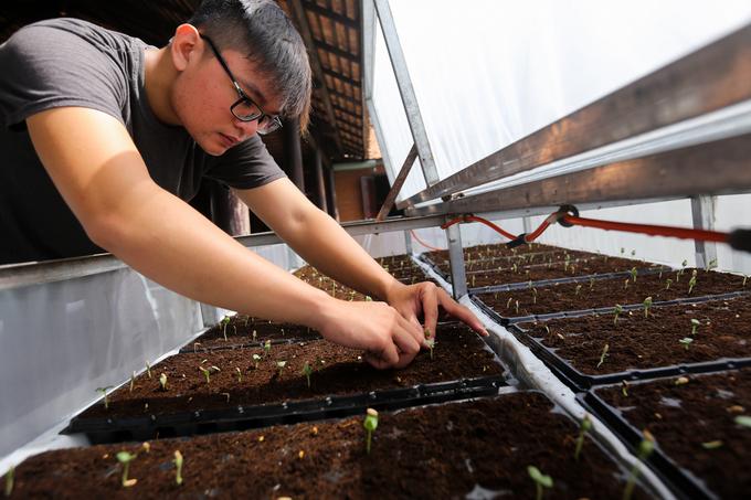 Việc thu hoạch và ươm giống diễn ra cuốn chiếu. Dưa lưới Nhật được ươm bằng hạt nhập từ nước ngoài thay vì dùng chính hạt của quả đã hái trong nhà vườn.