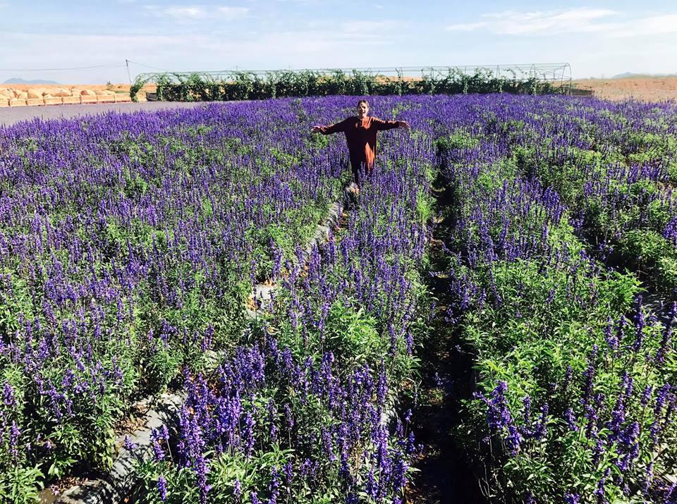 Lạc bước giữa cánh đồng hoa lavender ở Cầu Đất khiến bạn ngỡ mình như đang chu du ở nước Pháp xa xôi.
