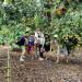 Nằm ngay cầu Cây Da, thuộc ấp Cây Da, xã Bình Lộc, thị xã Long Khánh, Đồng Nai - Vườn Dì Hai vốn là điểm tham quan nhà vườn nổi tiếng ở Long Khánh với nhiều trải nghiệm mới lạ.