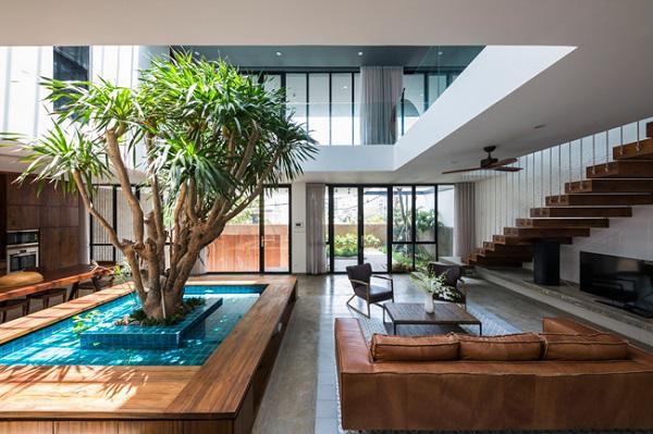 Một cây lớn được trồng ở chính giữa nhà, ngay dưới giếng trời, tạo thành bức tường tự nhiên ngăn cách nhà bếp, khu vực ăn uống và phòng khách.