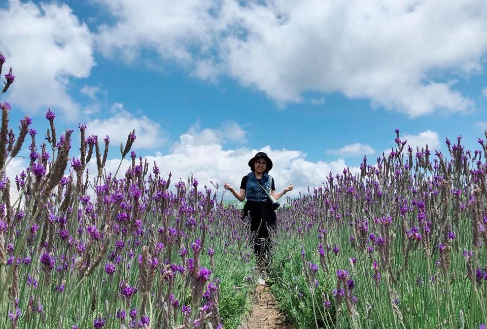 Với sắc tím nhẹ nhàng mà cuốn hút, cánh đồng hoa lavender những ngày này thu hút rất đông du khách đến thưởng lãm, tham quan và chụp ảnh.