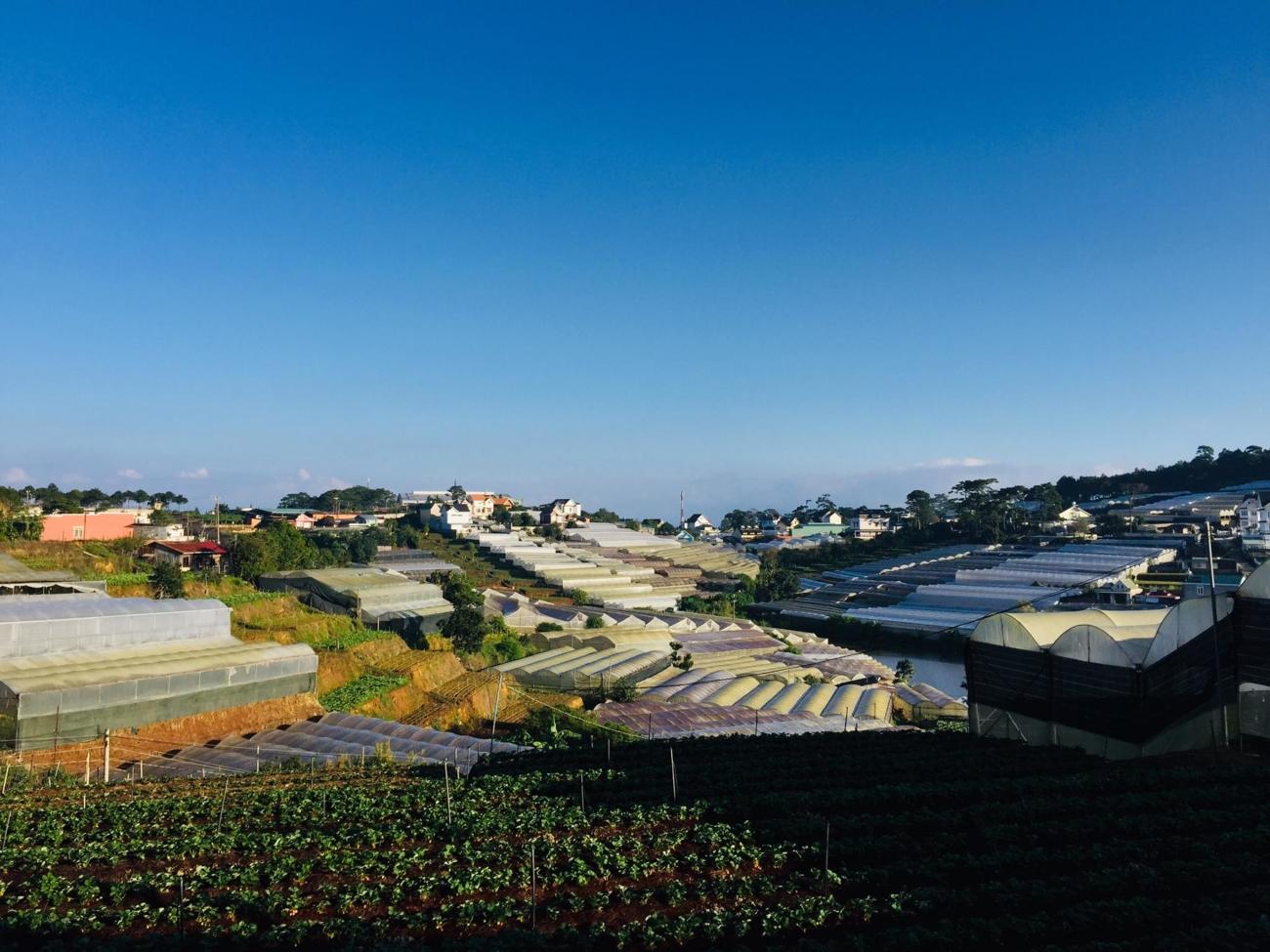 Khung cảnh Đà Lạt nhìn từ ngôi nhà.