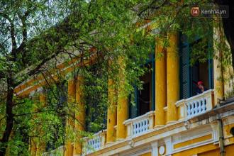 Những hàng me thơ mộng ở Sài Gòn.