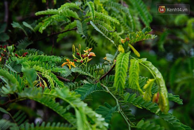 Me là loại cây thân gỗ, có thể cao tới 20m. Lá me là dạng lá kép lông chim, gồm từ 10 - 40 lá nhỏ, Hoa mọc thành dạng cành màu trắng hoặc vàng rất đẹp.