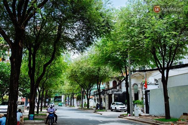 Hàng me trên đường Huỳnh Thúc Kháng.