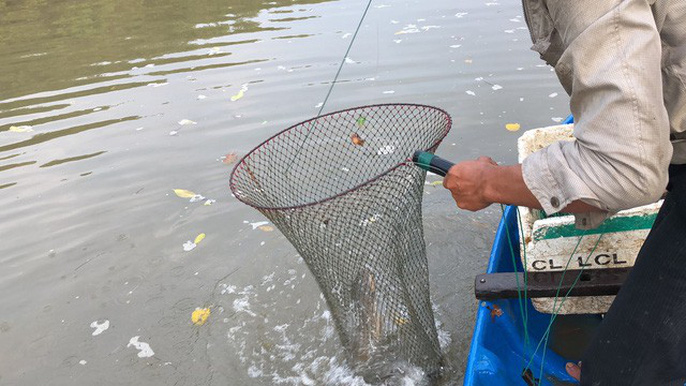 Với những con cá to, phải dùng vợt để tránh bị sẩy mất
