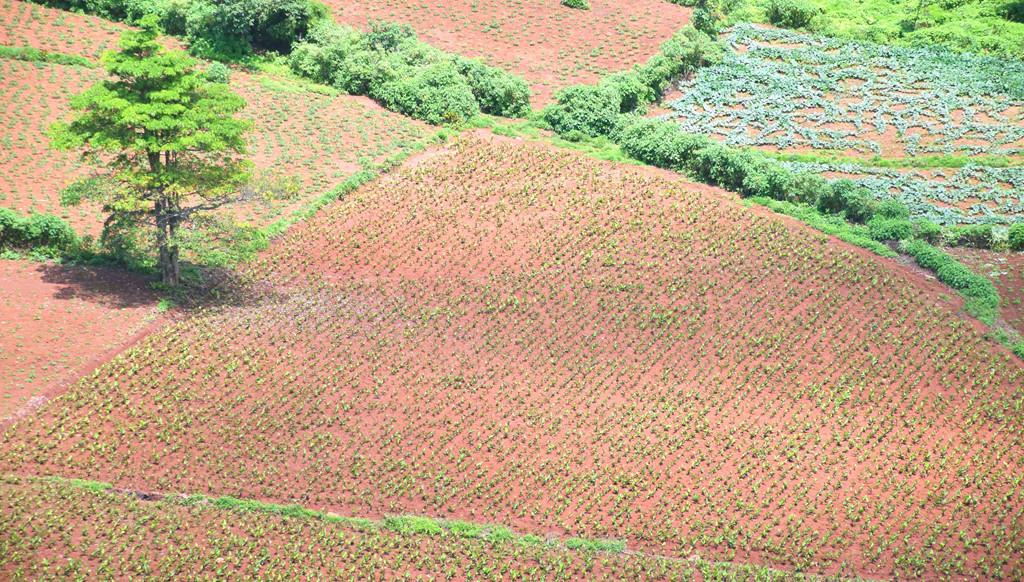 Những thung lũng quanh chân núi là nơi bà con canh tác hoa màu.