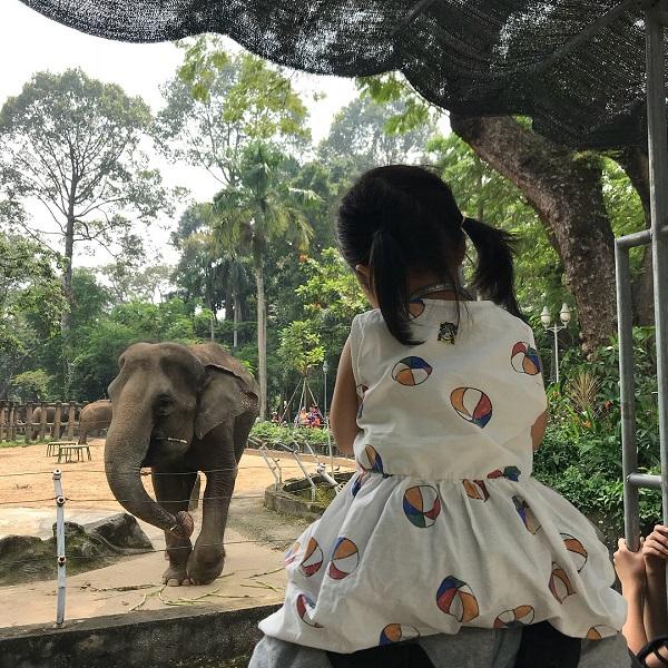 Là một trong những vườn thú lâu đời nhất thế giới, Thảo cầm viên Sài Gòn vẫn thường được mọi người truyền tai nhau những chuyện kể ly kỳ. Song, những mẩu chuyện này lại khá dễ thương, vì chúng liên quan đến các loài thực vật và động vật quý hiếm ở đây. Ảnh: @pranic_hj.
