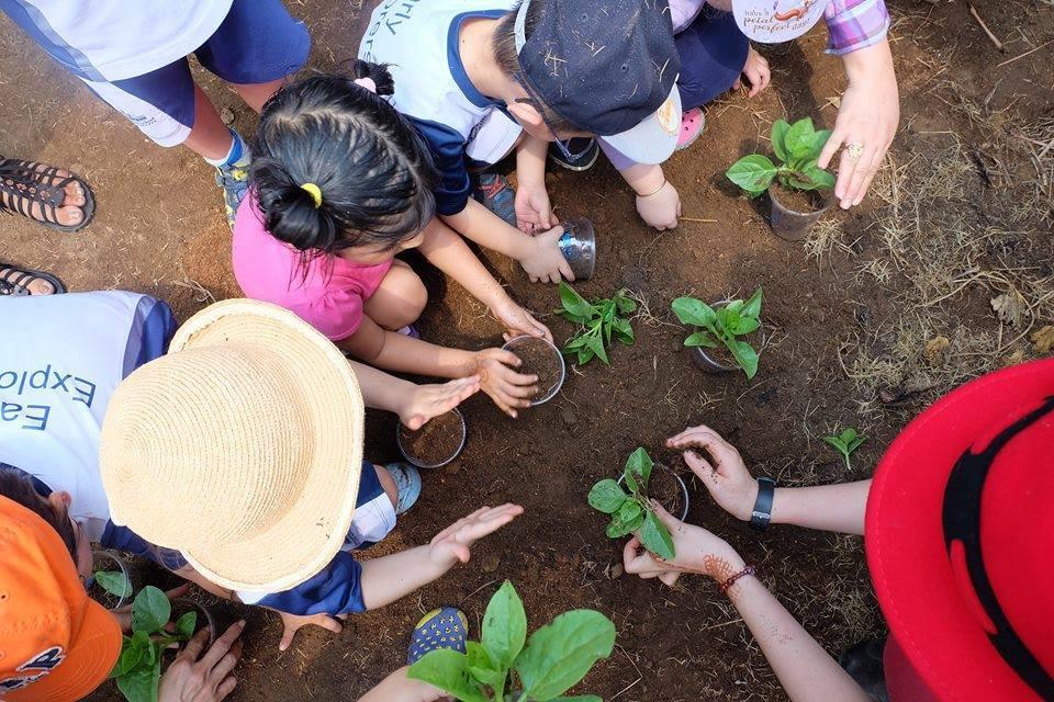 Nông trại được chia làm hai khu vực, khu vực vườn rau của nông trại trồng sẵn, chỉ việc vào thu hoạch và một khu là những thửa đất trống đã phân luống, cho các gia đình thuê lại để tự gieo trồng.