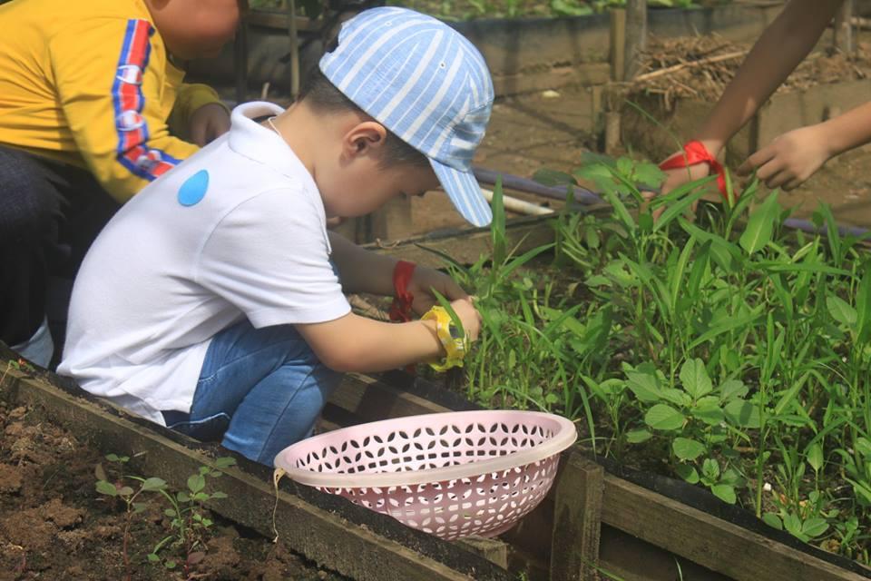 Đến đây các bé được tự mình trải nghiệm cuộc sống đồng quê dân dã với những hoạt động trải nghiệm vô cùng thú vị như: Tự mình trồng rau, bắt cá, làm bánh, tham gia các trò chơi rèn luyện sức khỏe...