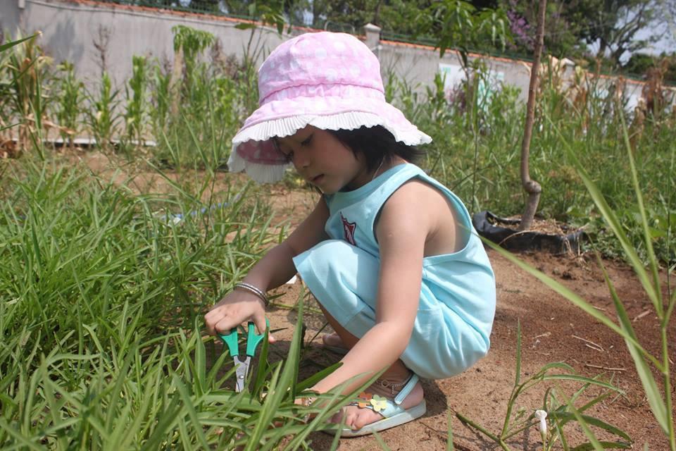 Trên mảnh đất rộng tới 1ha là vô vàn những luống rau muống, rau dền, cải xanh, cải cúc, mồng tơi, cà chua, cà rốt... xen lẫn với các giàn mướp, ngô, bí đao, dưa leo... Cha mẹ cũng có thể hướng dẫn con cách gọi tên, phân biệt các loại rau có trong vườn.