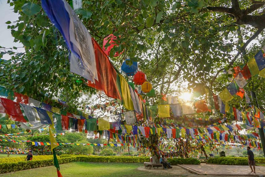 7. Lumbini (Nepal): Trong nhiều thập kỷ, đây chỉ là nơi tạm dừng chân trên đường từ Ấn Độ đến Nepal. Nhiều người không biết rằng vùng đất linh thiêng này là nơi sinh của Đức Phật. Hiện, dù có những đổi thay hiện đại phục vụ du lịch, di sản Lumbini vẫn giữ được sự bình yên vốn có, với những đàn chim tụ về vùng ngập nước xung quanh. Ảnh: Littlethingstravel.com.