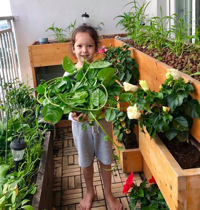 Bé Tôm thu hoạch rau mồng tơi từ khu vườn thu nhỏ.