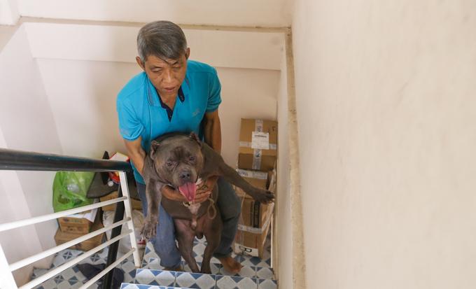 """Ba con chó Bully của ông có tuổi đời gần hai năm, được ông mua về với giá hơn 3.000 USD một con từ lúc chúng mới hai tháng tuổi. """"Tôi phải mất nhiều thời gian để tìm được chó đực có giống đẹp gốc bên Mỹ để cho phối giống với con Bully cái ở Việt Nam. Riêng tiền phối cũng là 3.000 USD"""", ông kể."""