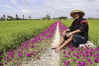 Ông Thảnh ngồi bên con đường hoa do chính tay mình trồng. Ảnh: Vietnamnet