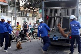 Hai con chó thả rông bị bắt trên đường Nguyễn Đình Chiểu. Ảnh: Lê Trai.