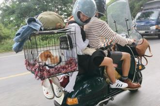 Đi phượt cùng thú cưng không phải là một ý tưởng mới, song, du lịch bằng hình thức làm lồng trên xe máy để chở thú cưng qua những chặng đường thì có lẽ chỉ có chàng trai Sài Gòn tên Minh Trúc là người đầu tiên.