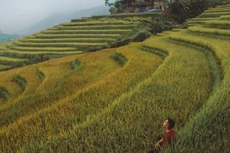 Đến hẹn lại lên, vào độ cuối tháng 9, những thửa ruộng bậc thang ở Sa Pa (Lào Cai) lại khoác lên mình màu vàng ươm hấp dẫn khách du lịch. Chỉ cần dành ra từ 2 đến 3 ngày, du khách có thể chiêm ngưỡng được đầy đủ vẻ đẹp của thị trấn vào mùa lúa chín.