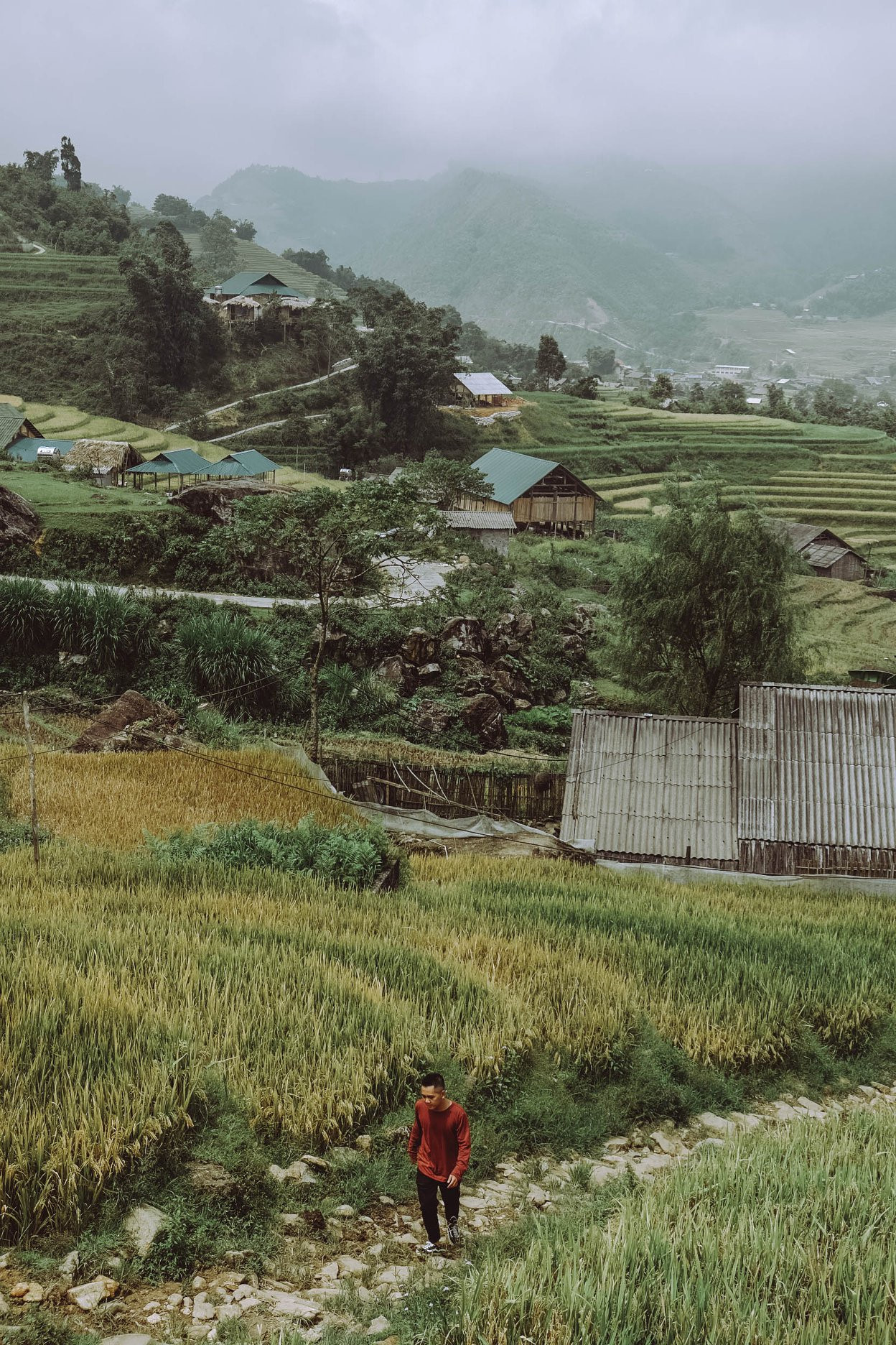 Những thửa ruộng bậc thang vàng ươm, thơm mùi lúa chín bao phủ khắp bản Tả Van, làm nên một bức tranh Sa Pa đậm chất vùng cao đất Việt. Thấp thoáng trên những thửa ruộng trập trùng là hình ảnh giản dị, mộc mạc của người dân lao động vùng Tây Bắc đang miệt mài gặt lúa.