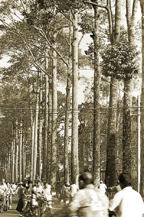 Cây cao bóng cả trên ngả đường An Dương Vương, quận 10. Ảnh Tam Thái chụp năm 2005.