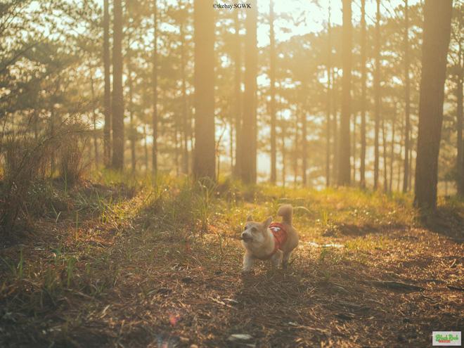 Trí có tình yêu với những chú cún từ năm 17 tuổi. Ảnh: FBNV