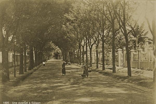 """Trong bộ sách """"150 năm hình bóng Sài Gòn"""" (1863-2013), nhiếp ảnh gia Tam Thái dành chương 23 để nói về """"Cây xanh đường phố Sài Gòn xưa""""."""