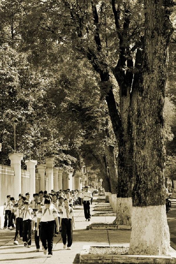 Hàng me trăm tuổi trên đường Nguyễn Du. Phần lớn trong số này nay đã bị đốn hạ. Ảnh Tam Thái chụp năm 2005.