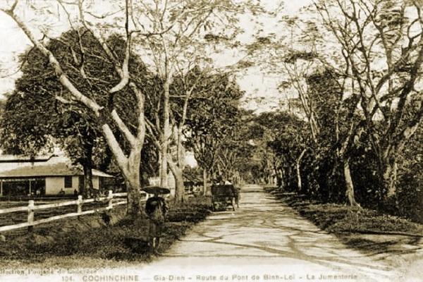 Hàng cây phượng vỹ rậm rì trên đường đến cầu Bình Lợi vào đầu thế kỷ 20. Đây cũng là đường Thiên lý Bắc Nam trước thập niên 1950.