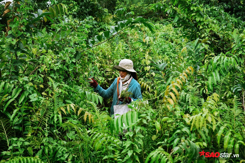 """Chị Hằng (34 tuổi) cho biết: """"Hai năm nay, ngoài làm nông, buổi chiều chị còn đi hái thêm rau dương xỉ để bán. Mỗi ngày chị lội các đìa được tầm 50- 60 nghìn đồng."""""""