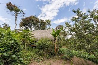 Nhìn từ xa, có thể ngôi nhà này sẽ làm cho bạn thất vọng toàn tập vì trông nó khá nhỏ bé, lụp xụp và lọt thỏm giữa rừng xanh rộng lớn.