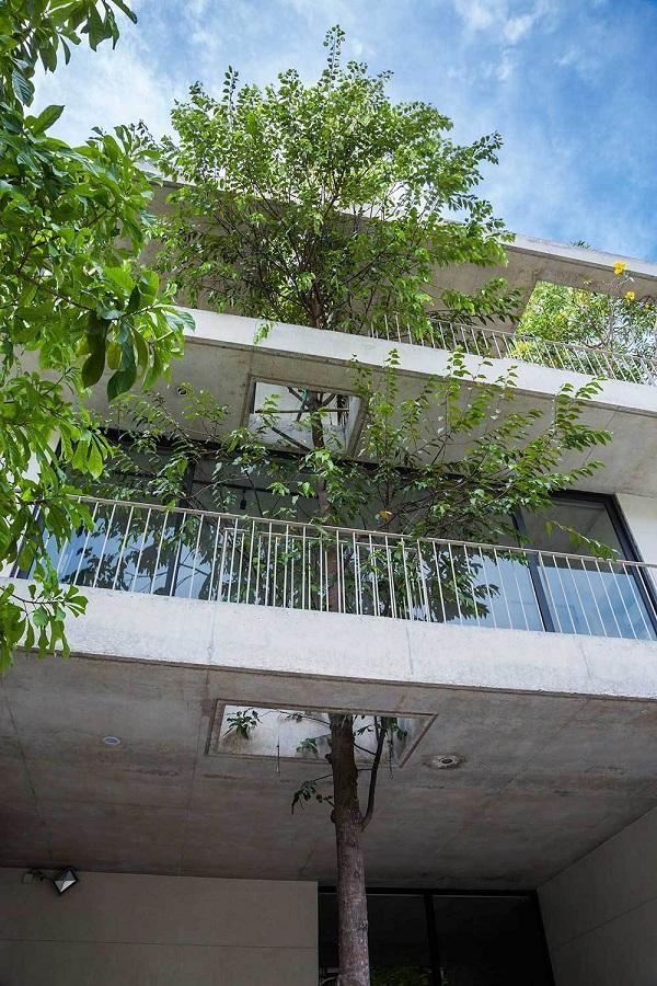 Những lỗ hổng được khoét rộng để cây xanh tự do phát triển, vươn cao.