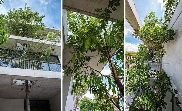 Những khoảng trống được bố trí ở khu vực ban công hay khoảng thông tầng giúp cây có điều kiện phát triển tốt
