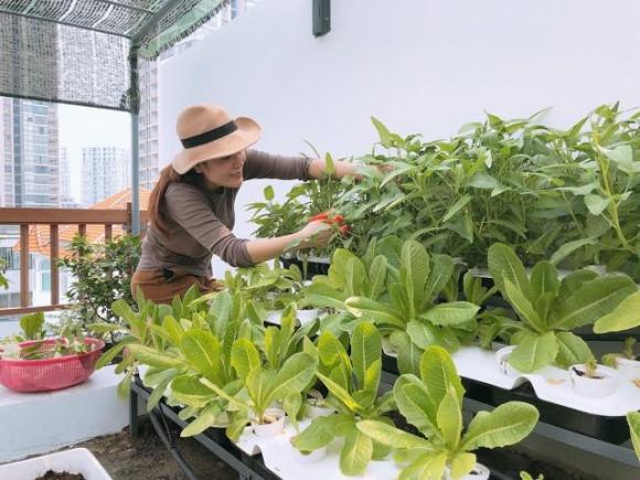 Dù rất giàu có và bận rộn nhưng Hoa hậu Phương Lê vẫn tự tay chăm sóc vườn rau sạch trên sân thượng. Ảnh: NLd.
