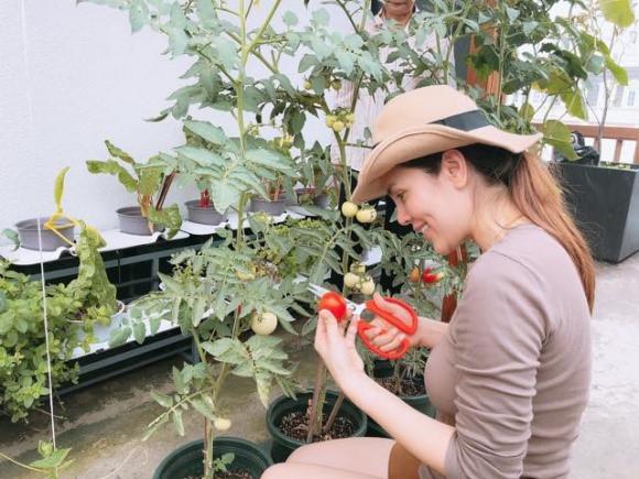 Phương Lê trồng nhiều rau và trái cây như cà chua, rau muống, cải xanh, mướp...Ảnh: NLd.