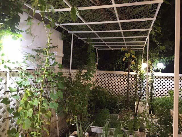 Trong căn biệt thự với diện tích gần 400m2, cặp đôi Công Vinh - Thủy Tiên dành ra một khoảng không gian tạo sân vườn đồng thời có đất để trồng rau sạch. Ảnh: Dân Việt