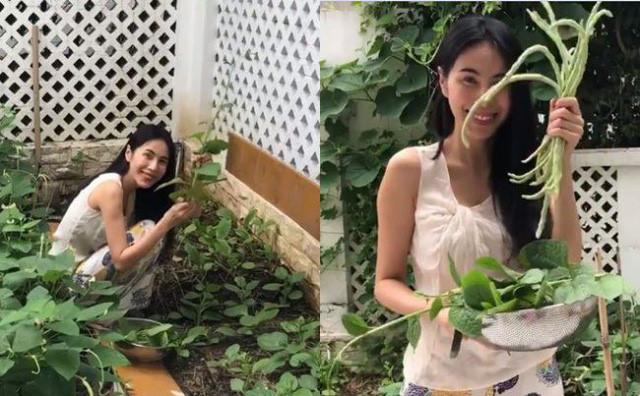 Thủy Tiên còn cho biết, vì rau trong vườn nhiều quá, ăn không hết nên mẹ cô đã mang ra chợ bán. Ảnh: Dân Việt