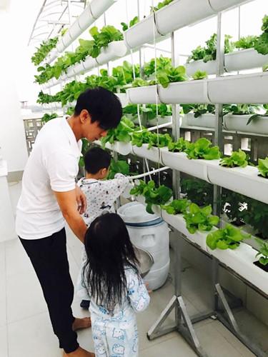Cũng như vợ chồng Công Vinh - Thủy Tiên, vợ chồng Lý Hải - Minh Hà sở hữu một vườn rau xanh trên mái nhà và sân thượng. Ảnh: FB Ly Hai Minh Ha.