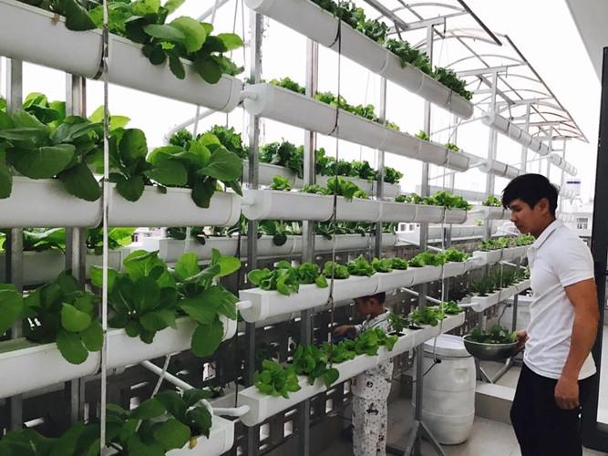 Vườn rau trên sân thượng được vợ chồng Lý Hải - Minh Hà đầu tư thiết kế theo dạng thổ canh và thủy canh. Ảnh: FB Ly Hai Minh Ha.