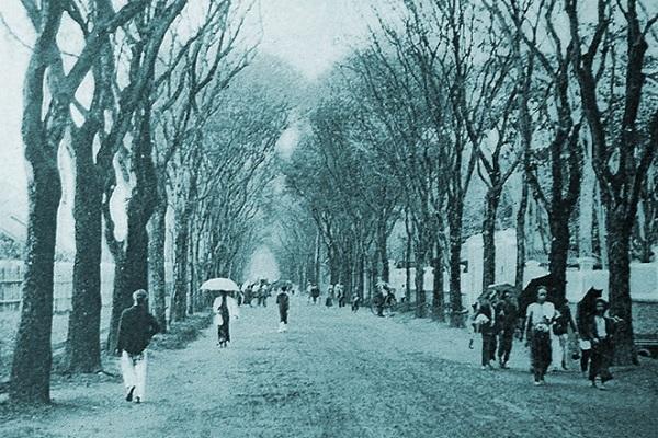 """Bức ảnh """"Thu về"""", được chụp năm 1901. Mọi người đang dạo chơi trên một nẻo phố của Sài Gòn. Vào thời này, Sài Gòn chưa có sự hiện diện của xe hơi. Đường nơi đây cán đá nhưng chưa tráng nhựa. Cây xanh đã cao to, giúp Sài Gòn mang dáng vẻ của một phố – quê lãng mạn."""