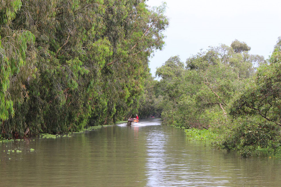 Xa xa những chiếc thuyền rẽ nước vào rừng tràm ẢNH: TẤN HIỆP