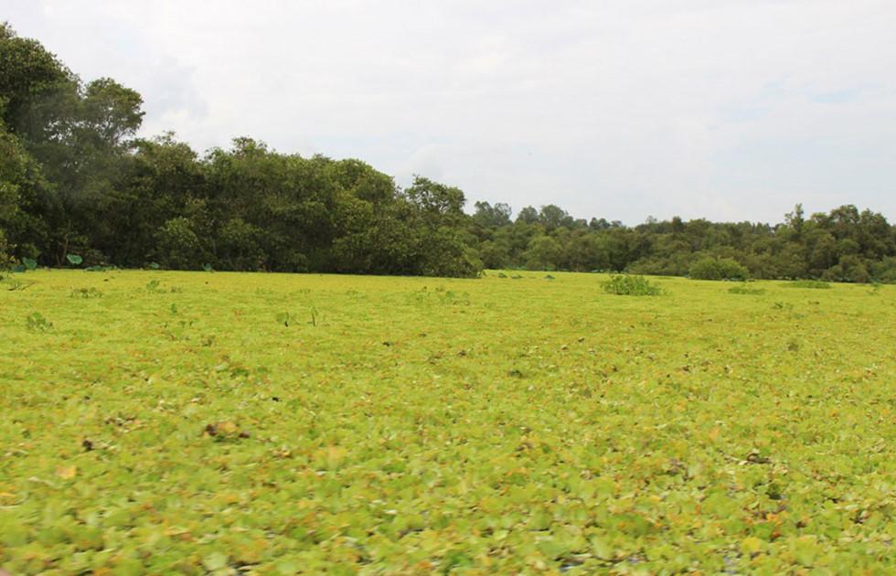 Mùa nước nổi là lúc rừng tràm đẹp nhất ẢNH: TẤN HIỆP
