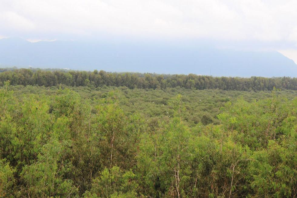 Từ trên đài quan sát có thể ngắm nhìn toàn bộ cảnh rừng tràm ẢNH: TẤN HIỆP